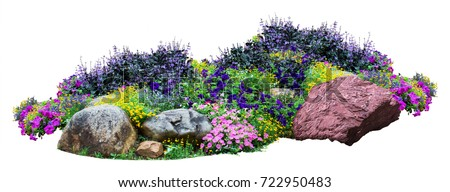 Natural flower and stone in garden isolated on white background. Garden flower part #722950483