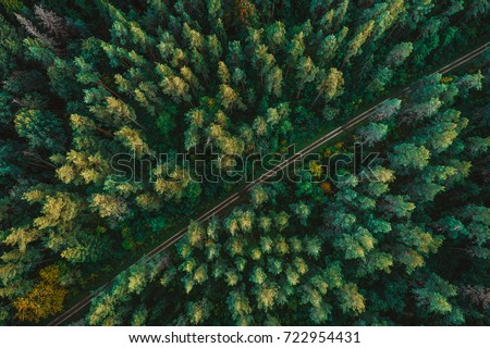 Pine forest from above, fall season, forest road Royalty-Free Stock Photo #722954431