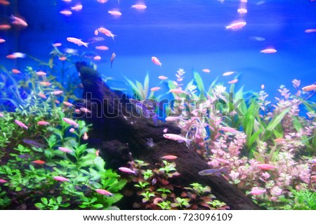 tropical  aquarium with fishes #723096109