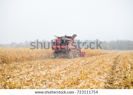 Corn crops field harvest in autumn natural scene. Rural outdoors landscaped background #723111754