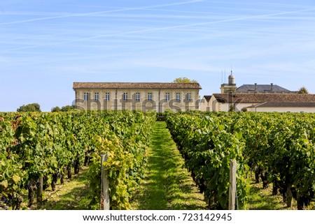 Vendange of Red Wine at Château Gruaud-Larose Grand Cru, Saint Julien, Bordeaux in France #723142945
