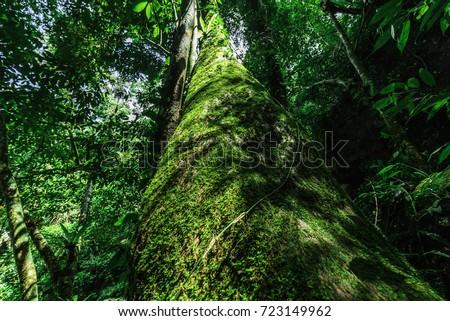 Lichen on the tree #723149962