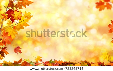 autumn background with maple leaves #723245716