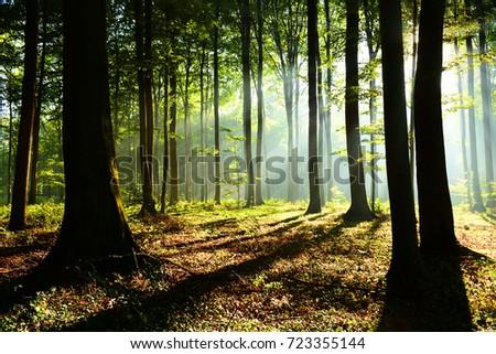 Forest landscape #723355144