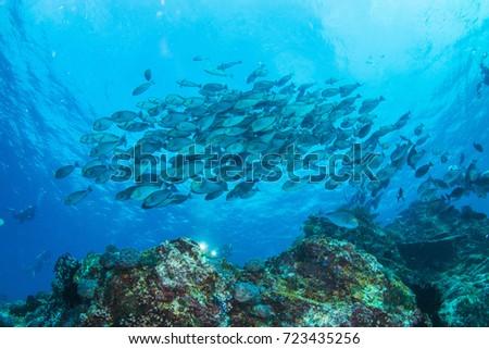 Group fish #723435256