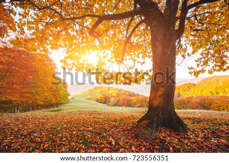 Stunning image of the bright trees in sunny beams. Gorgeous day and vivid scene. Red and yellow leaves. Location place Carpathians, Ukraine, Europe. Warm tone. Beauty world. Best wallpapers of earth.