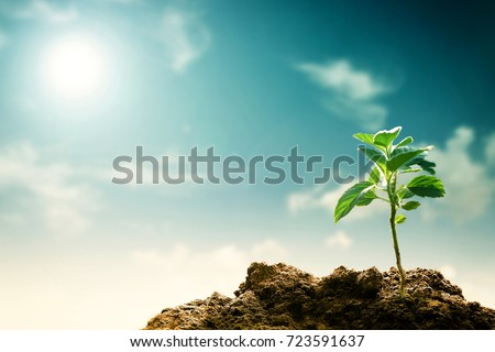 A new grown tree seedling. Great image for global warming, hope, sustainability, green planet and agriculture