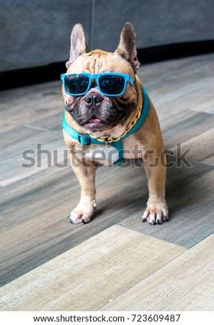 Portrait of dressed up pug wearing glasses