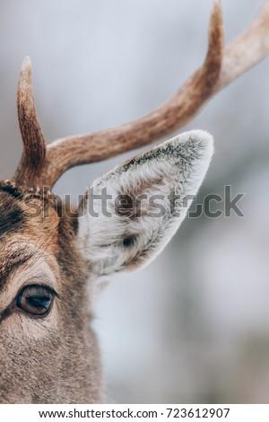 Deer in winter time. #723612907