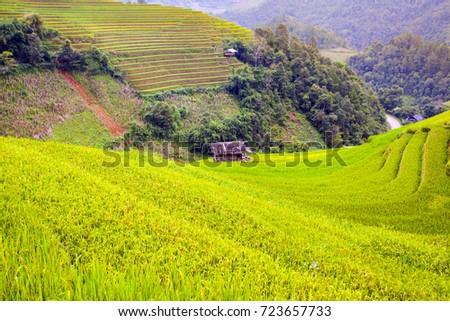 terraced fields and mountain in northwest vietnam  #723657733