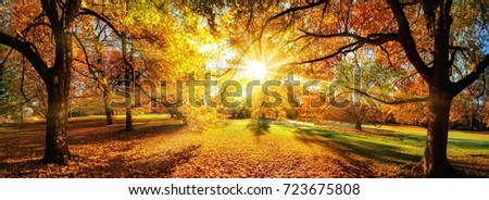 Amazing panoramic autumn scenery in a park, the sun casts beautiful rays through the foliage #723675808