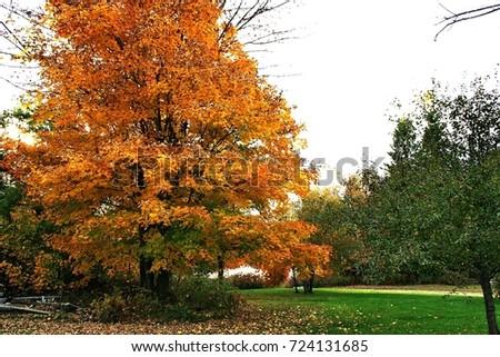 Autumn in Quebec. Canada, north America. #724131685