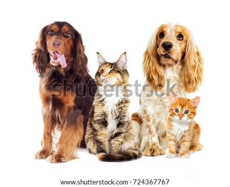 dog and kitten on a white background #724367767