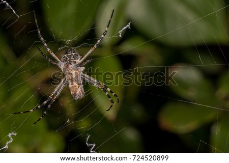 Spider and prey #724520899