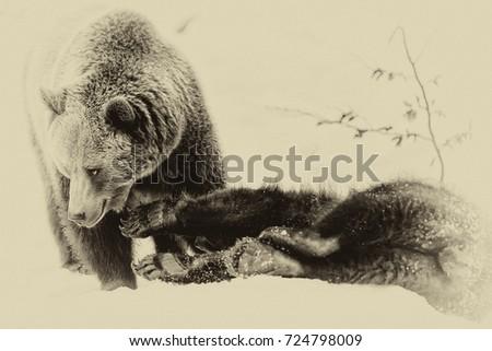 Brown Bears (Ursus arctos) in Lake Clark National Park, Alaska, USA #724798009