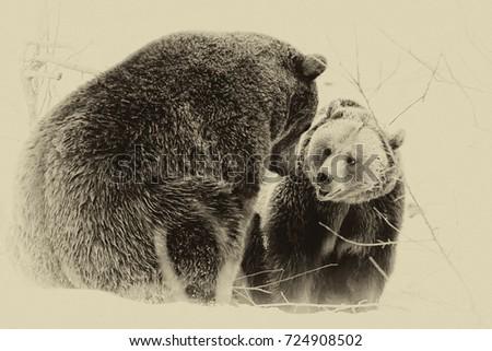 Brown Bears (Ursus arctos) in Lake Clark National Park, Alaska, USA #724908502