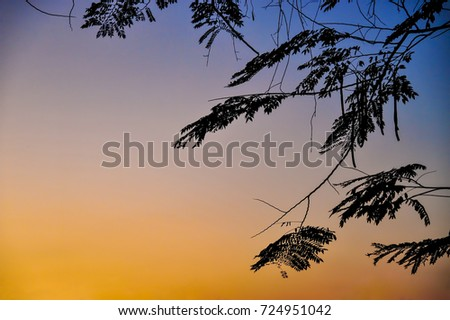 silhouette tree branches in twilight sky with graduated blue-orange color that looked scary and suited for halloween background or some horror picture in landscape scene photo with gain and noise