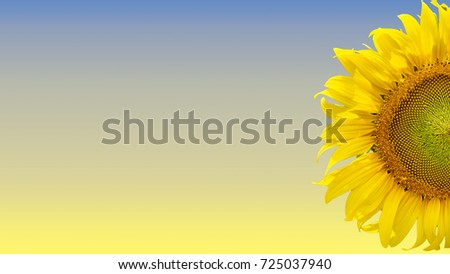 Sunflower half with blue and yellow background #725037940