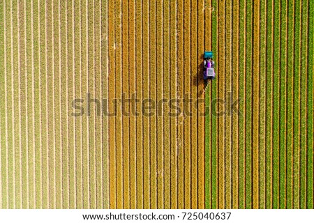 Aerial view on the tractor working on the tulip field #725040637