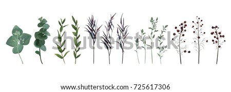 Eucalyptus seeded, blue agonis thyme, asparagus berry designer art watercolor foliage natural branches leaves elements set, collection. Vector decorative beautiful cute elegant illustration for design #725617306