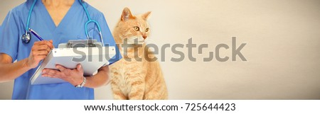 Veterinarian doctor with cat in veterinary clinic. #725644423