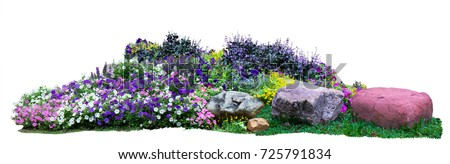 Natural flower and stone in garden isolated on white background. Garden flower part #725791834