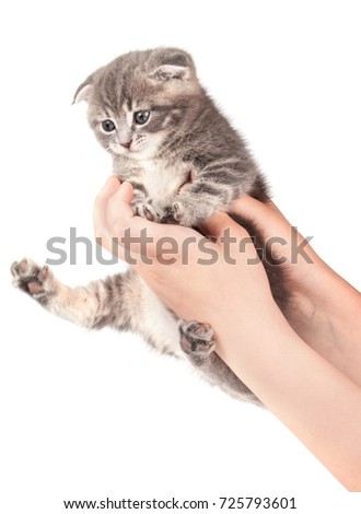Small kitten isolated on white background. Pets #725793601