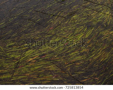 Leaf of grass on the river. #725813854