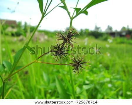 Grass flower #725878714