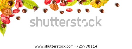 Colorful autumnal leaves and nuts on white panoramic background with copy space, autumn concept #725998114