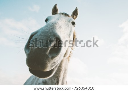 White horse portrait selfie funny pets close up wild nature animal thematic
