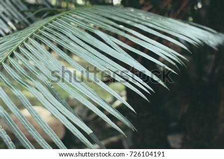 Green Leaves #726104191