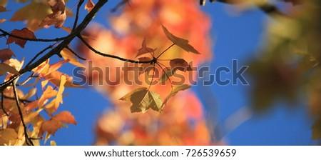 Fall Foliage Colors! #726539659