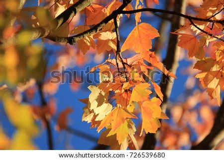 Fall Foliage Colors! #726539680