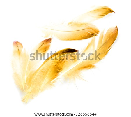 bird feather on white background #726558544
