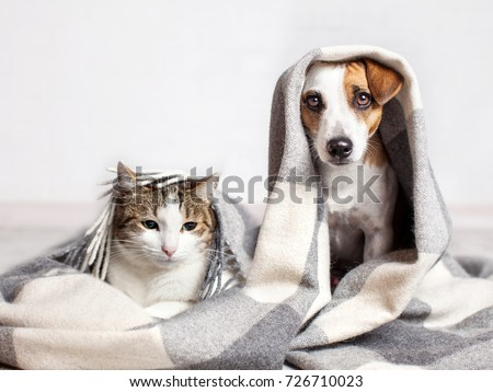 Dog and cat under a plaid. Pet warms under a blanket in cold autumn weather Royalty-Free Stock Photo #726710023