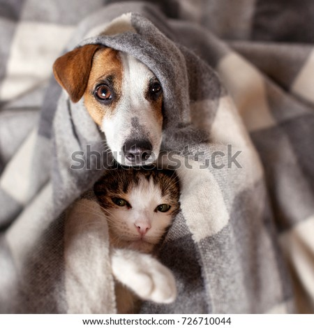 Dog and cat under a plaid. Pet warms under a blanket in cold autumn weather Royalty-Free Stock Photo #726710044