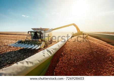 Combine harvesting corn  Royalty-Free Stock Photo #726928603
