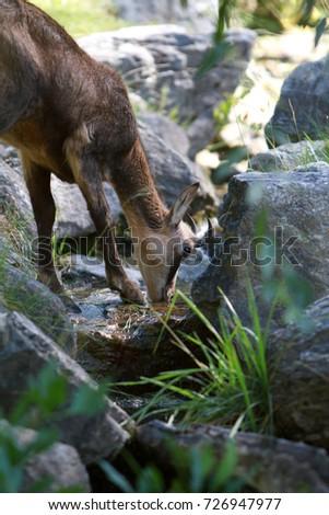 little deer #726947977