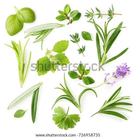 Fresh spices and herbs isolated on white background #726958735
