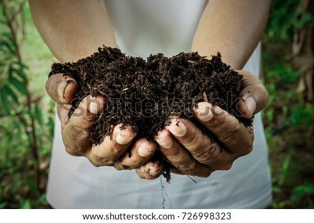 Farmer holding pile of arable soil. Male agronomist examining quality of fertile agricultural land. Can be used as a fertilizer to accelerate the growth of plants. Hands holding soil in farm #726998323