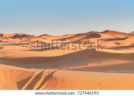 Caravan of Camels in Erg Chebbi Sand dunes in Sahara Desert near Merzouga, Morocco #727446193