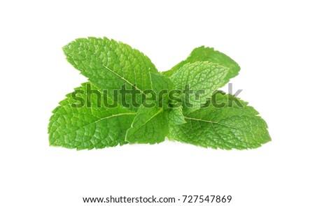 Fresh mint on white background #727547869