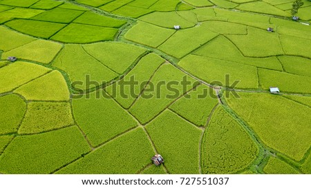 Aerial view of the green and yellow rice field, grew in different pattern, soon to be harvested, Nan, Thialand #727551037