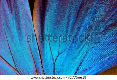 Wings of a butterfly Morpho texture background. Morpho butterfly Royalty-Free Stock Photo #727756618