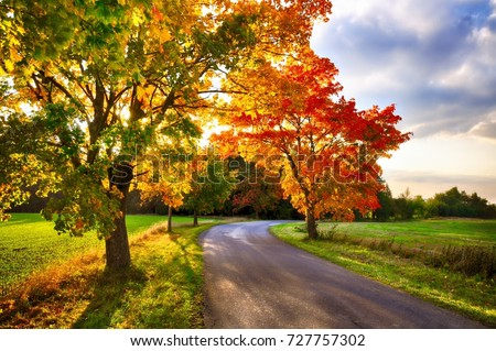Maple tree with colored leafs and asphalt road at autumn/fall daylight.Relaxing atmosphere. Countryside landscape.  #727757302