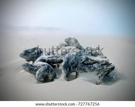 Oregon Sand Dunes #727767256