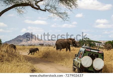 Watching Elephants on Safari Royalty-Free Stock Photo #727902637