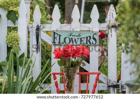roses and white picket fence with fresh flowers sign in backyard garden