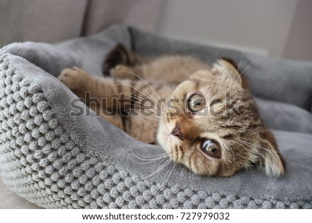 Brown, lazy, cute, smart CAT in routine everyday, Concept set for cat lover #727979032
